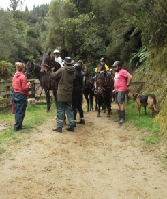 Preparing for a horse trek