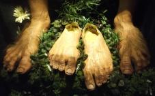 Real life fake hobbit feet.