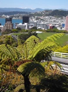 The iconic silver fern tree with the Wellington background: could this get anymore New Zealand?